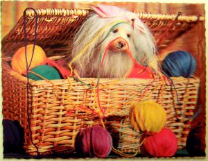 Typical dog in yarn basket photograph.