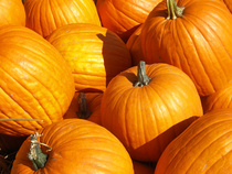 Not sure what to do with ALL THOSE PUMPKINS? David Hadbawnik breaks it down for you.